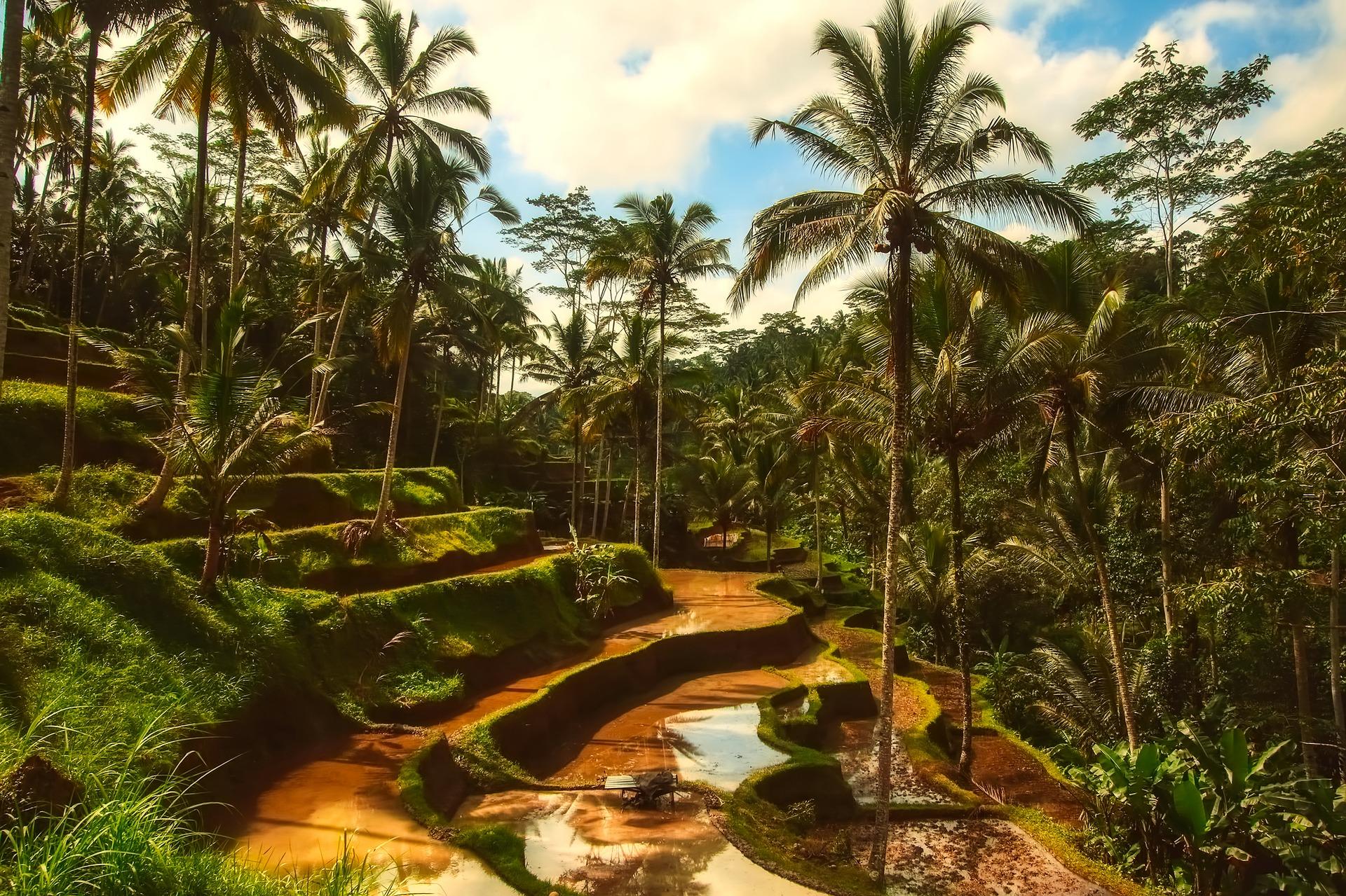Bali | DigiNo | 10 Best Locations For Digital Nomads